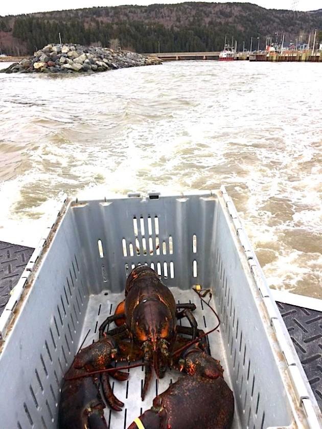 lobster-in-box.jpg