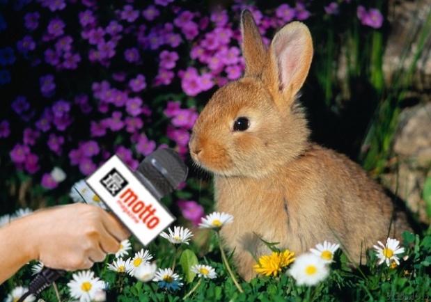 Bunny-flowers-mic.jpg