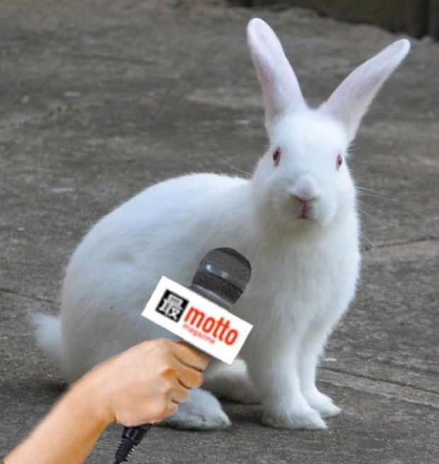 bunny-mic-white.jpg