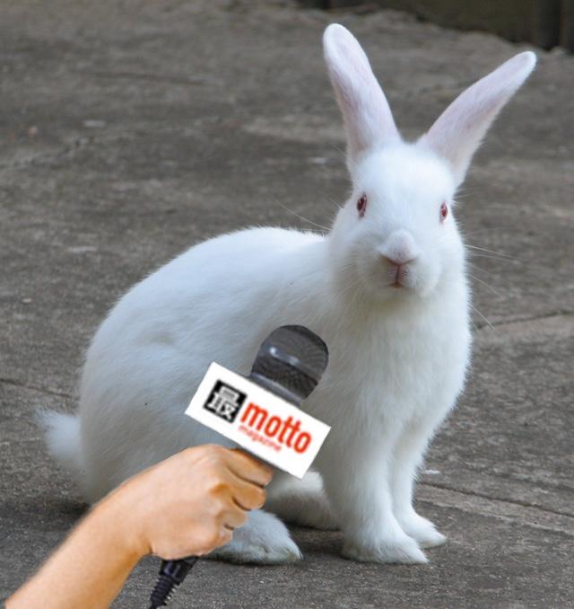 bunny-mic-white