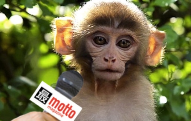 interview-MONKEY-3.jpg