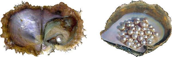 main_cultured_pearls-1.jpg