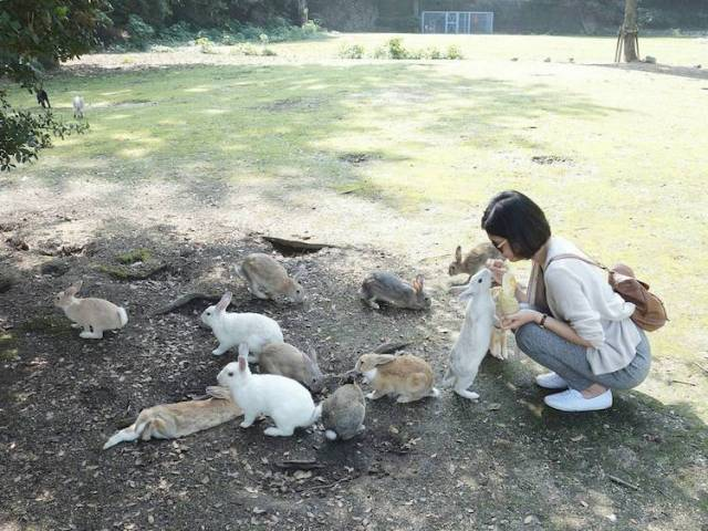 okunoshima-rabbit-island-japan-1-1.jpg