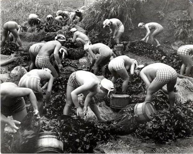pearl-harvest-japan.jpg