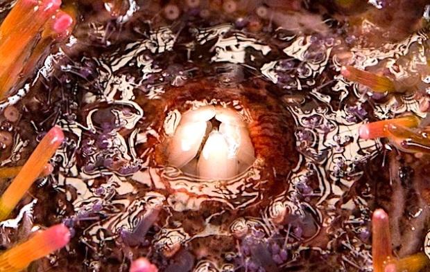 sea-U-zoomy.jpg