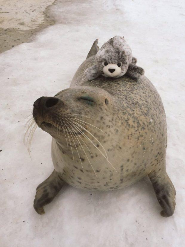seal-hugs-plush-toy-1.jpg