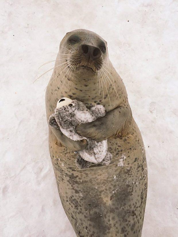 seal-hugs-plush-toy-2