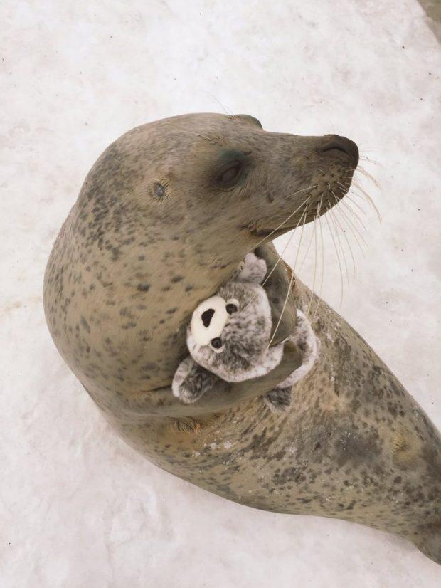seal-hugs-plush-toy-3.jpg