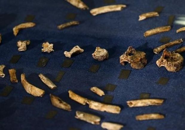 "Fossils of a newly discovered ancient species, named ""Homo naledi"", are pictured during their unveiling outside Johannesburg September 10, 2015. Naledi means ""star"" in South Africa's Sesotho language. REUTERS/Siphiwe"