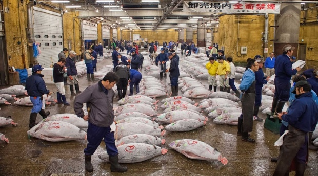frozen_tuna_tsukiji_1_of_3