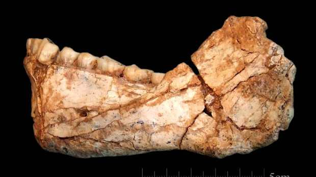 An almost complete adult mandible discovered at the site of Jebel Irhoud (Credit: Jean-Jacques Hublin/MPI EVA Leipzig)