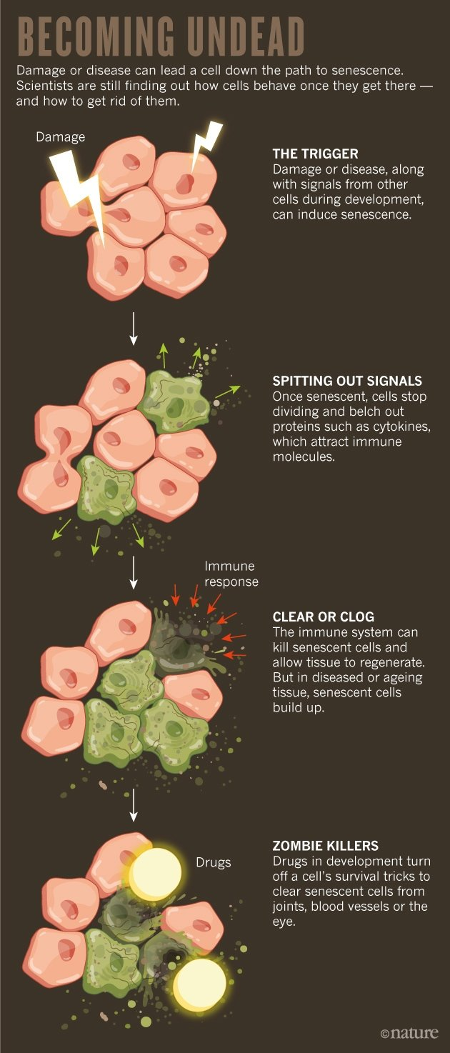 26_10_17-feature-graphic-zombie-cells.jpg
