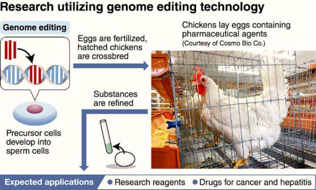 mambo-chickens-interferon-beta