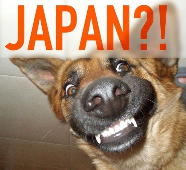 dog-japan