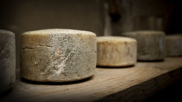 cheese_wide-da128da18dcdcb5d36f1ef2ebb69e90dcc0557b4-s800-c85.jpg